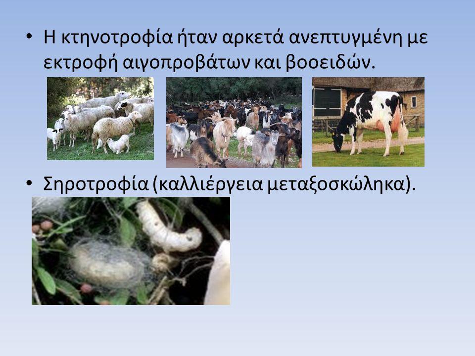 Η κτηνοτροφία ήταν αρκετά ανεπτυγμένη με εκτροφή αιγοπροβάτων και βοοειδών.