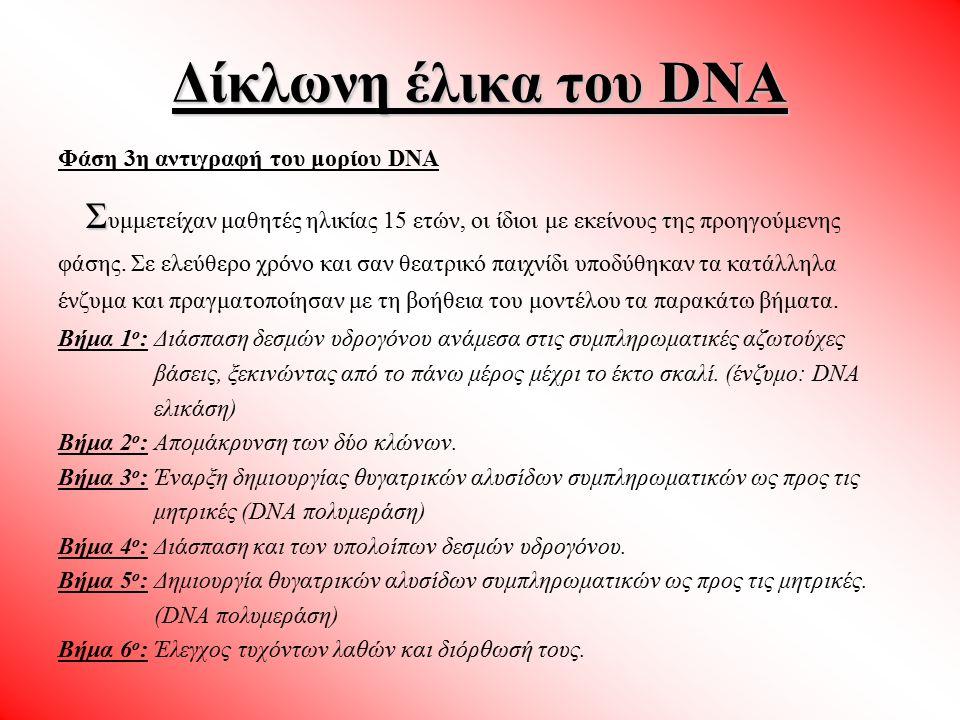 Δίκλωνη έλικα του DNA Φάση 3η αντιγραφή του μορίου DNA.