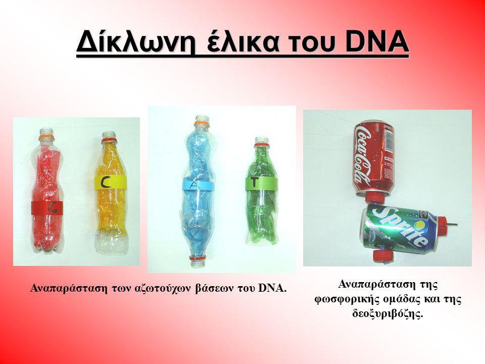 Δίκλωνη έλικα του DNA Αναπαράσταση της φωσφορικής ομάδας και της δεοξυριβόζης.