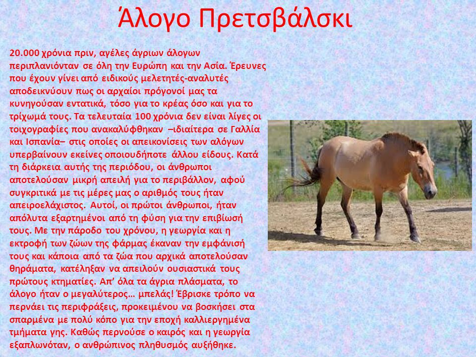 Άλογο Πρετσβάλσκι
