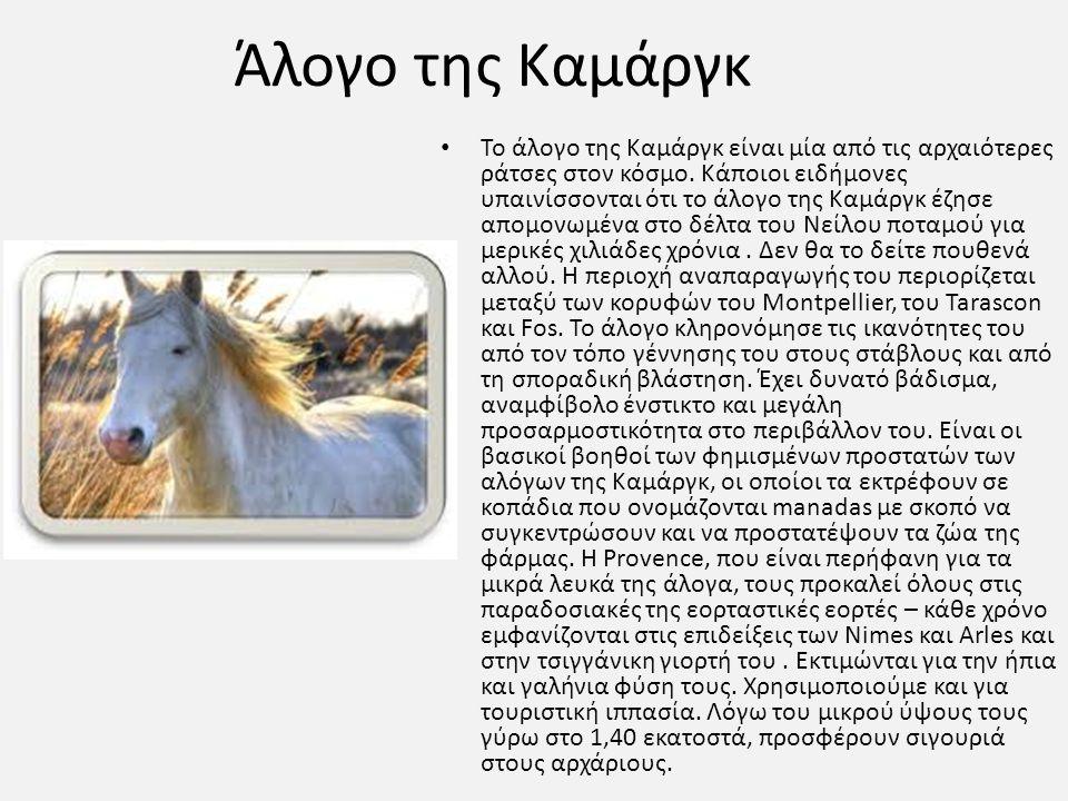 Άλογο της Καμάργκ