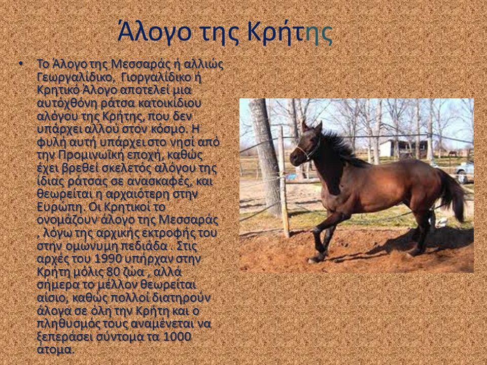 Άλογο της Κρήτης