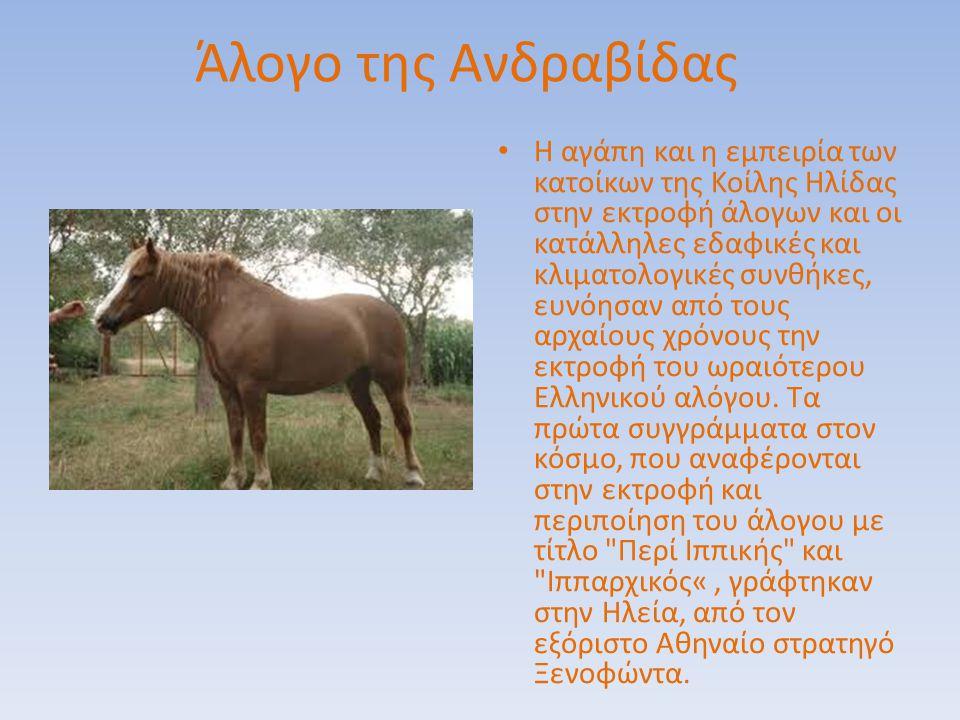 Άλογο της Ανδραβίδας