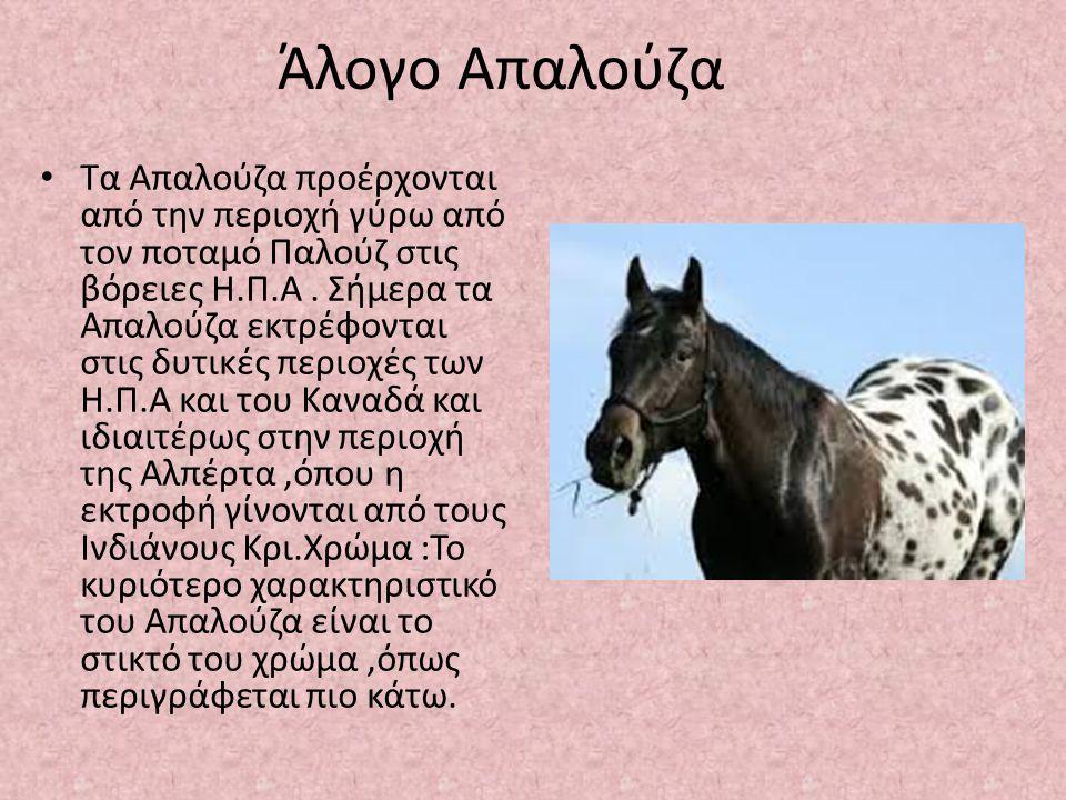 Άλογο Απαλούζα