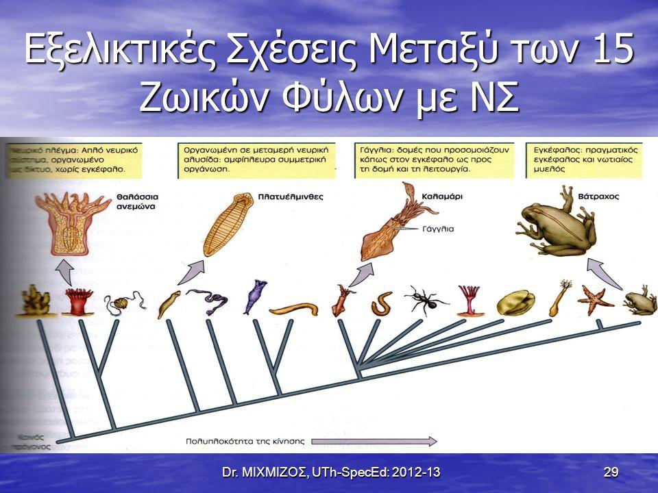 Εξελικτικές Σχέσεις Μεταξύ των 15 Ζωικών Φύλων με ΝΣ