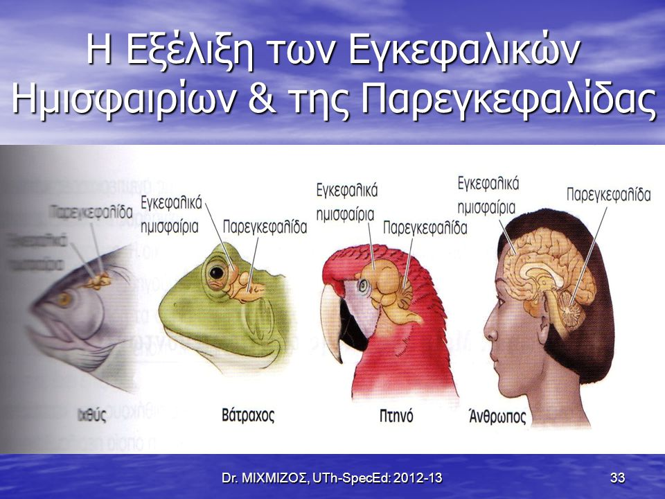 Η Εξέλιξη των Εγκεφαλικών Ημισφαιρίων & της Παρεγκεφαλίδας