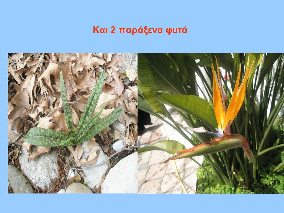 Και 2 παράξενα φυτά