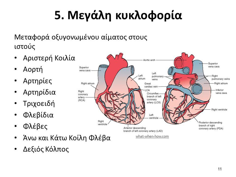6. Μικρή ή πνευμονική κυκλοφορία