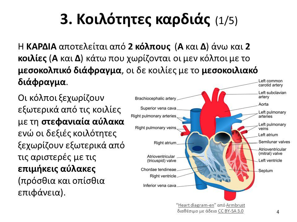 3. Κοιλότητες καρδιάς (2/5)
