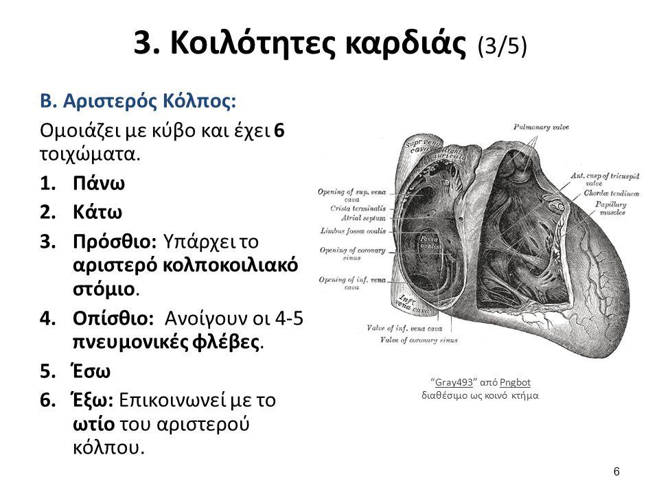 3. Κοιλότητες καρδιάς (4/5)