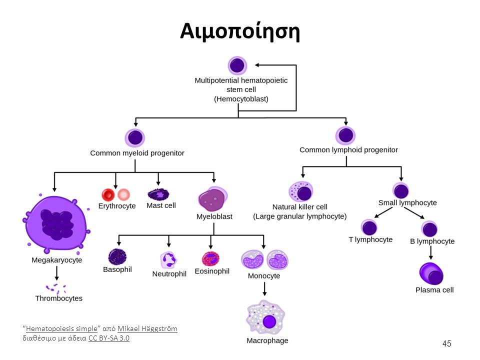 Μεταμόσχευση περιφερικών μυελικών κυττάρων του αίματος
