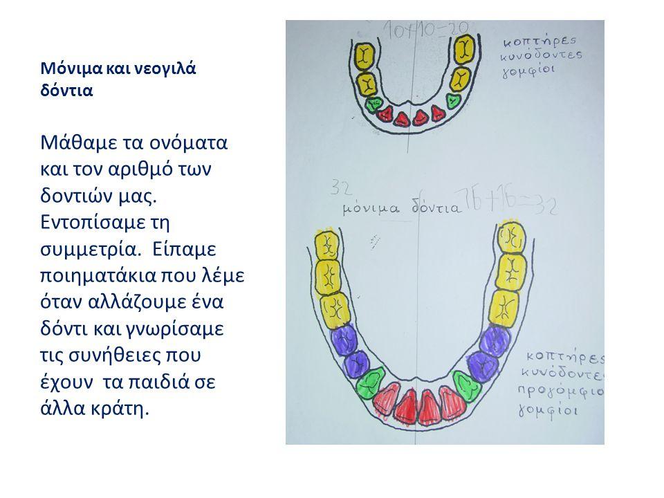 Μόνιμα και νεογιλά δόντια