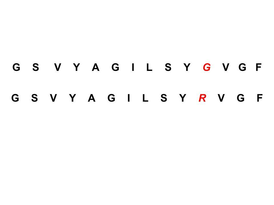 G S V Y A G I L S Y G V G F G S V Y A G I L S Y R V G F.