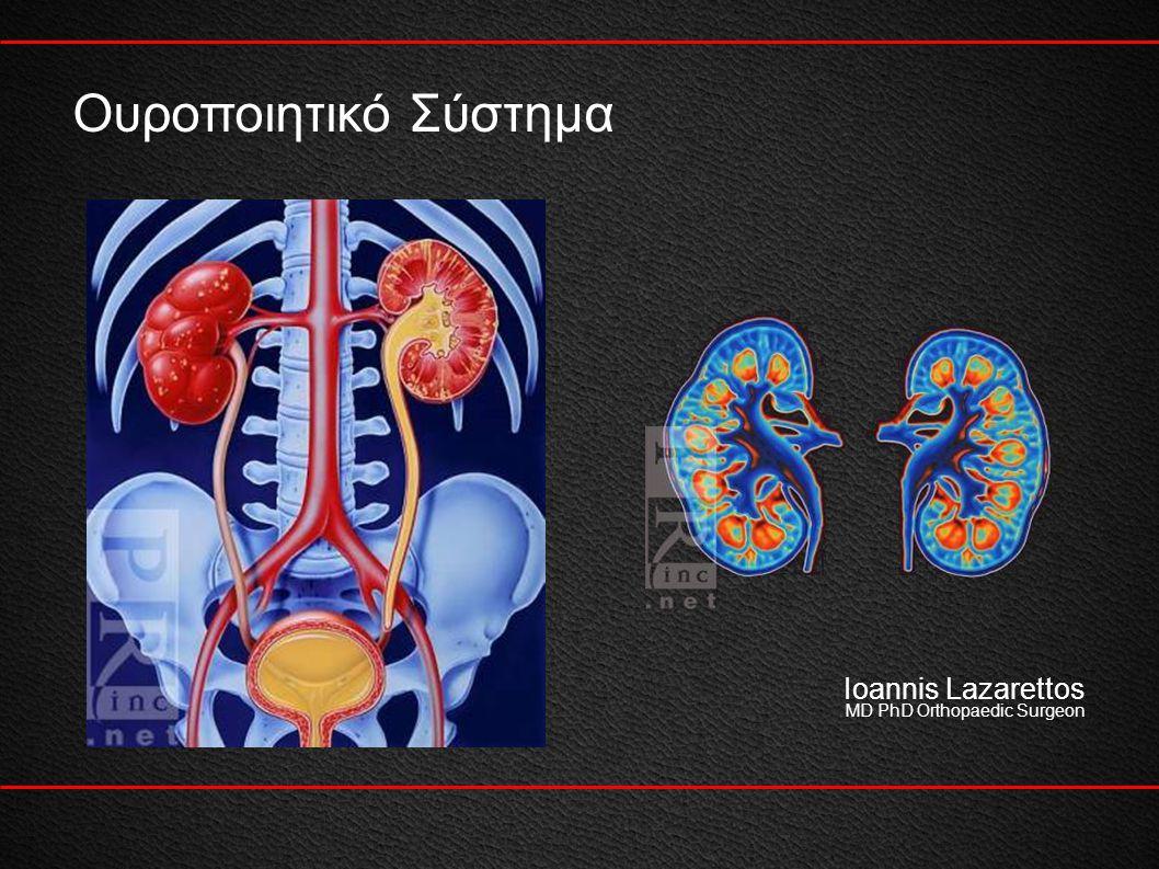 Ουροποιητικό Σύστημα Ioannis Lazarettos MD PhD Orthopaedic Surgeon 1
