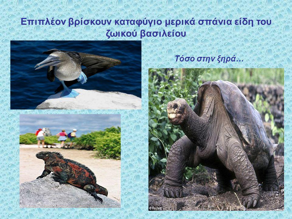 Επιπλέον βρίσκουν καταφύγιο μερικά σπάνια είδη του ζωικού βασιλείου