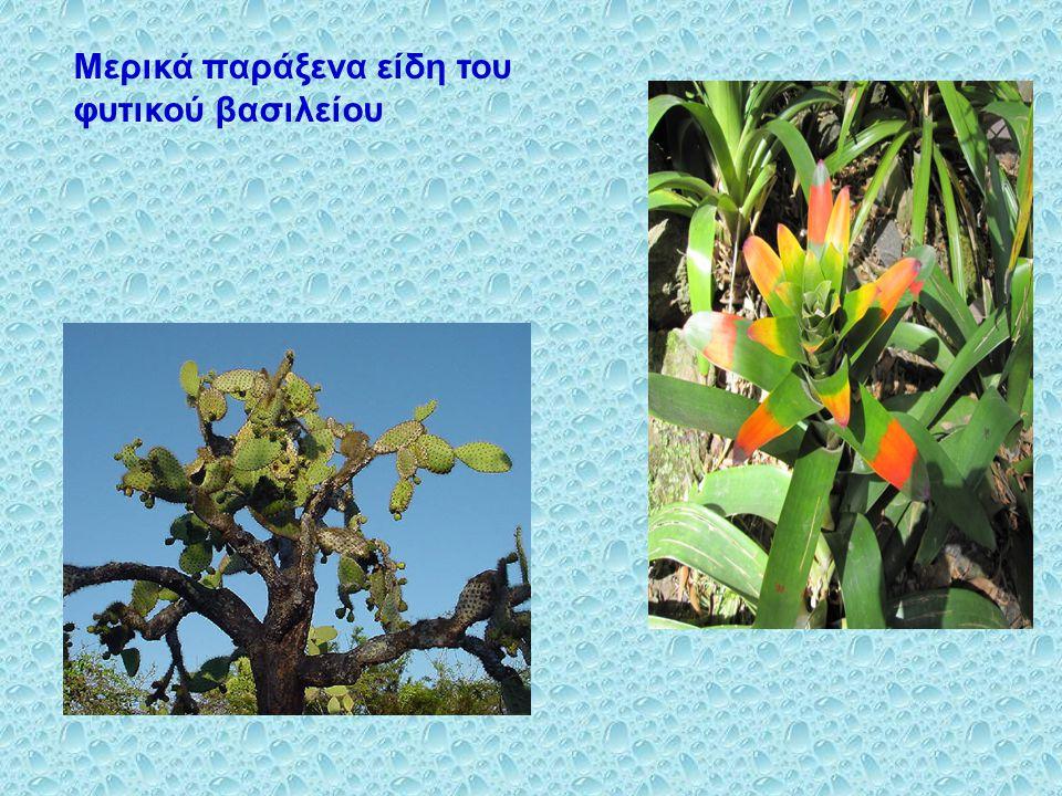 Μερικά παράξενα είδη του φυτικού βασιλείου