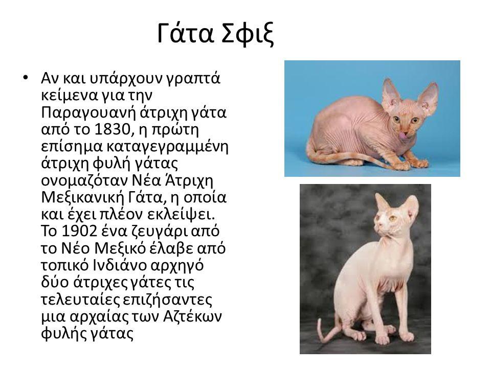 Γάτα Σφιξ
