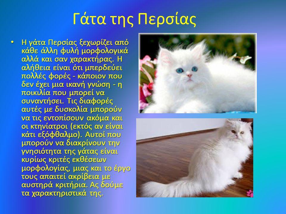 Γάτα της Περσίας