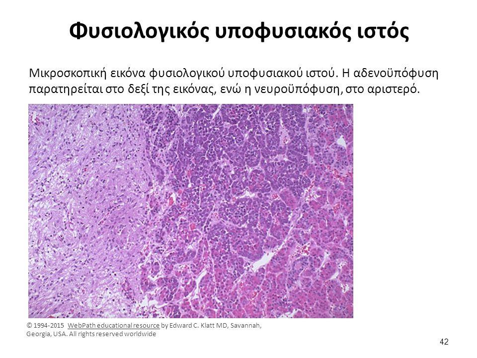 Φυσιολογικός αδενοποϋποφυσιακός ιστός
