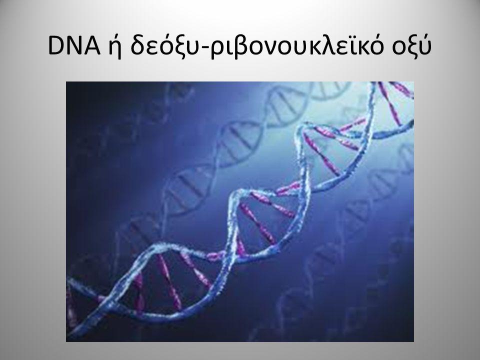 DNA ή δεόξυ-ριβονουκλεϊκό οξύ