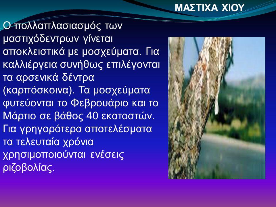 ΜΑΣΤΙΧΑ ΧΙΟΥ