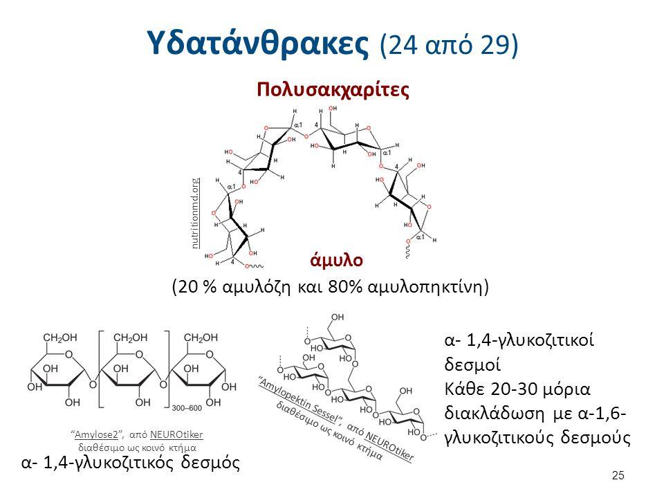 Υδατάνθρακες (24 από 29) Πολυσακχαρίτες άμυλο