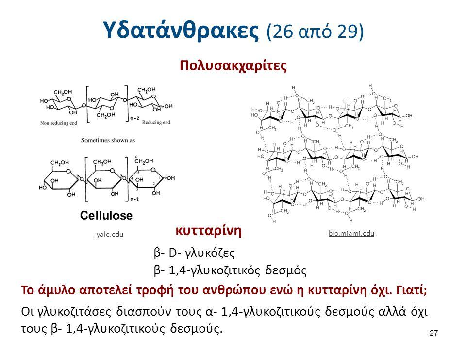 Υδατάνθρακες (26 από 29) Πολυσακχαρίτες κυτταρίνη β- D- γλυκόζες