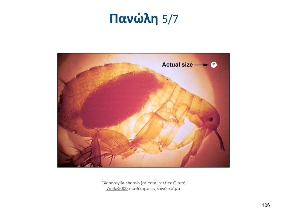 Plague in Ashod , από Shmuliko διαθέσιμο ως κοινό κτήμα