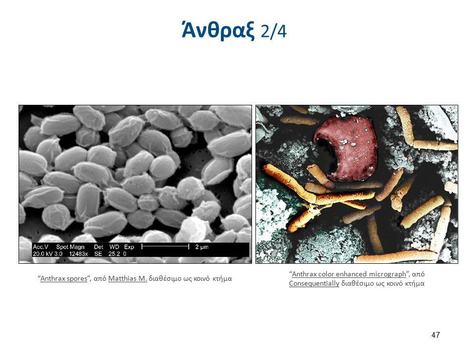 Άνθραξ 3/4 Anthrax PHIL 2033 , από ChrisiPK διαθέσιμο ως κοινό κτήμα