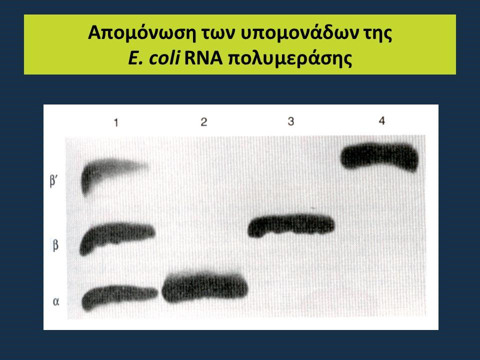 Απομόνωση των υπομονάδων της E. coli RNA πολυμεράσης