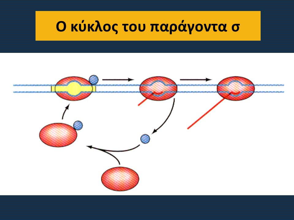 Ο κύκλος του παράγοντα σ