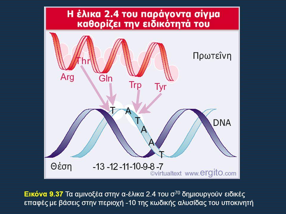 Εικόνα 9. 37 Τα αμινοξέα στην α-έλικα 2