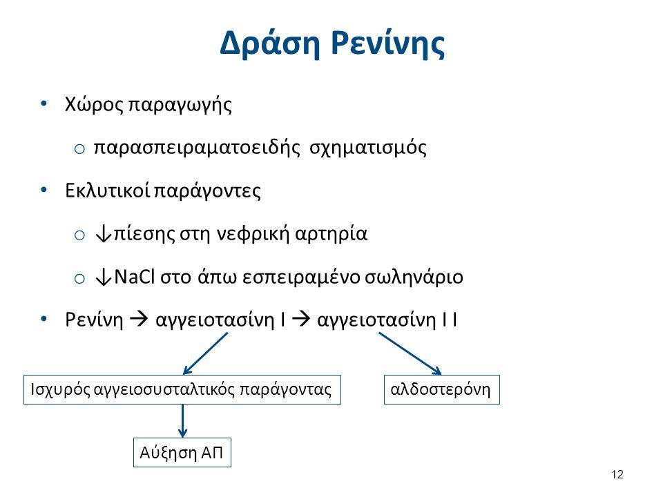 Δράση Αλδοστερόνης Κατακράτηση ύδατος. Κατακράτηση Na (Cl).