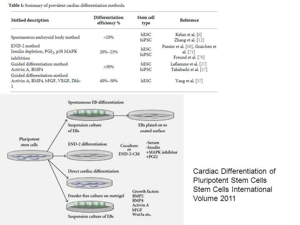 Cardiac Differentiation of Pluripotent Stem Cells