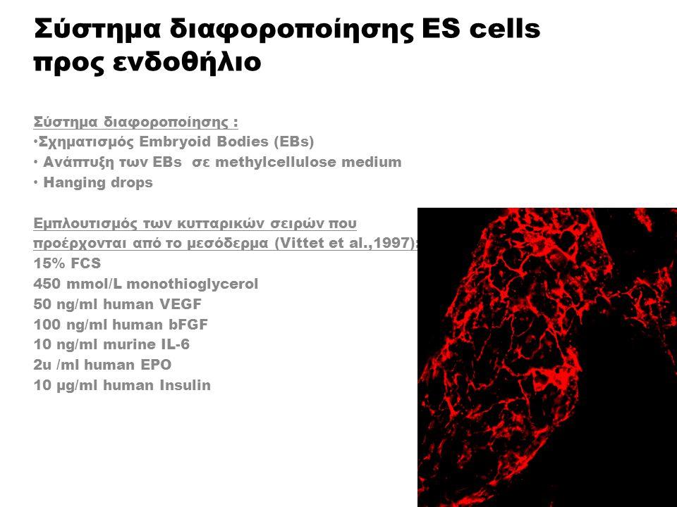 Σύστημα διαφοροποίησης ES cells προς ενδοθήλιο