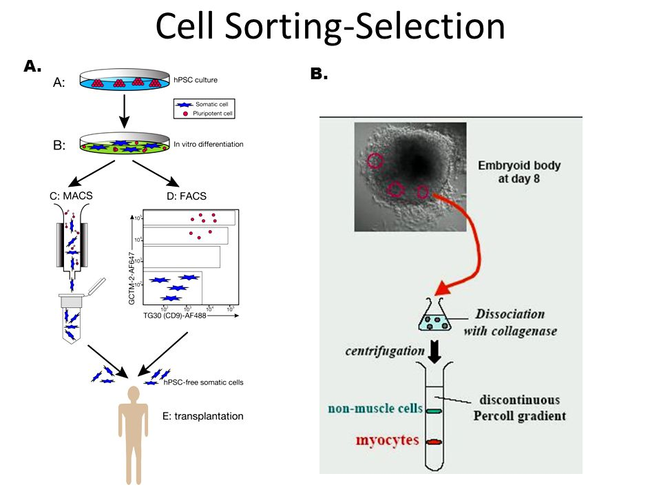 Cell Sorting-Selection
