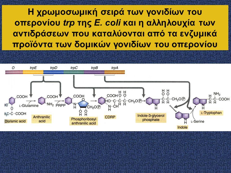 Η χρωμοσωμική σειρά των γονιδίων του οπερονίου trp της E