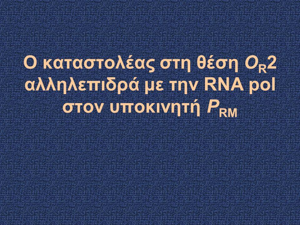 Ο καταστολέας στη θέση OR2 αλληλεπιδρά με την RNA pol στον υποκινητή PRM