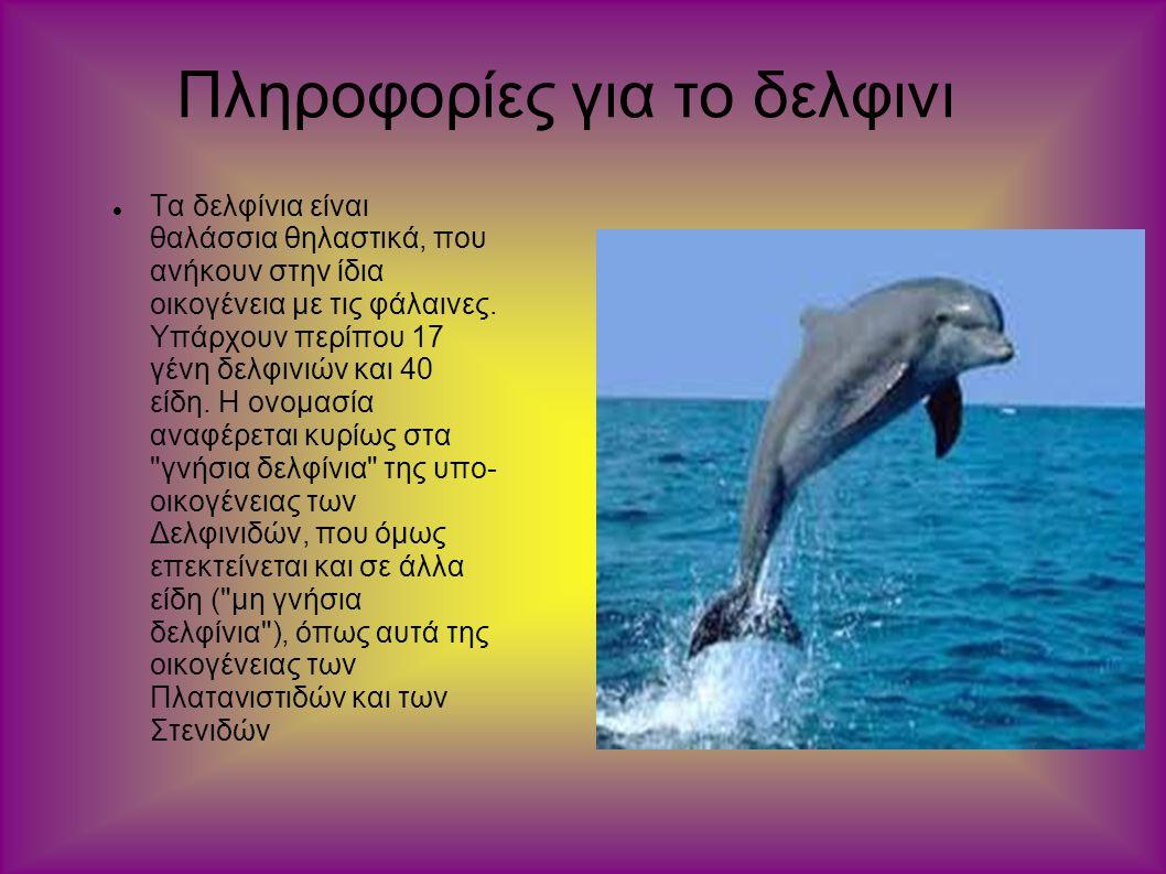 Πληροφορίες για το δελφινι