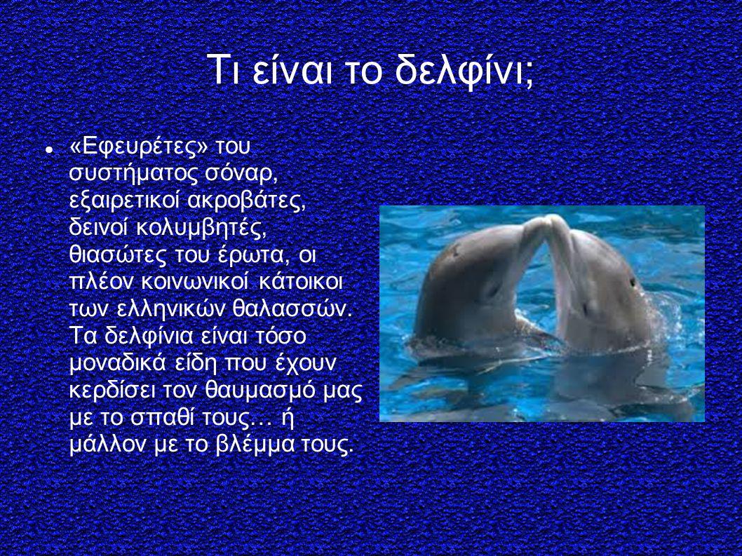 Τι είναι το δελφίνι;