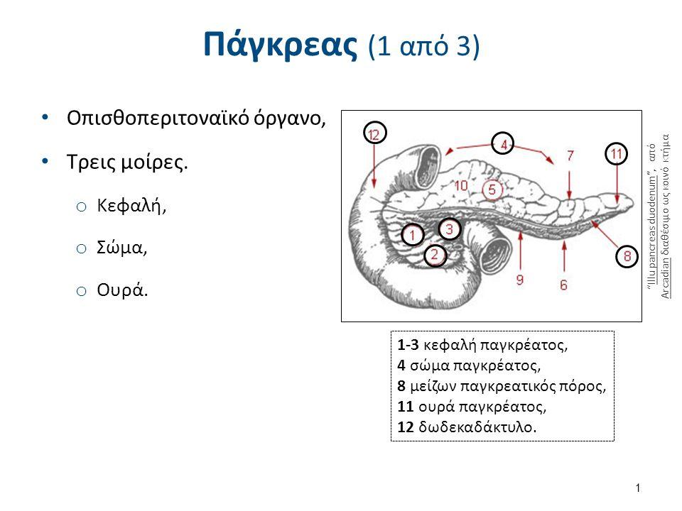 1820 The Pancreas , από CFCF διαθέσιμο με άδεια CC BY 3.0