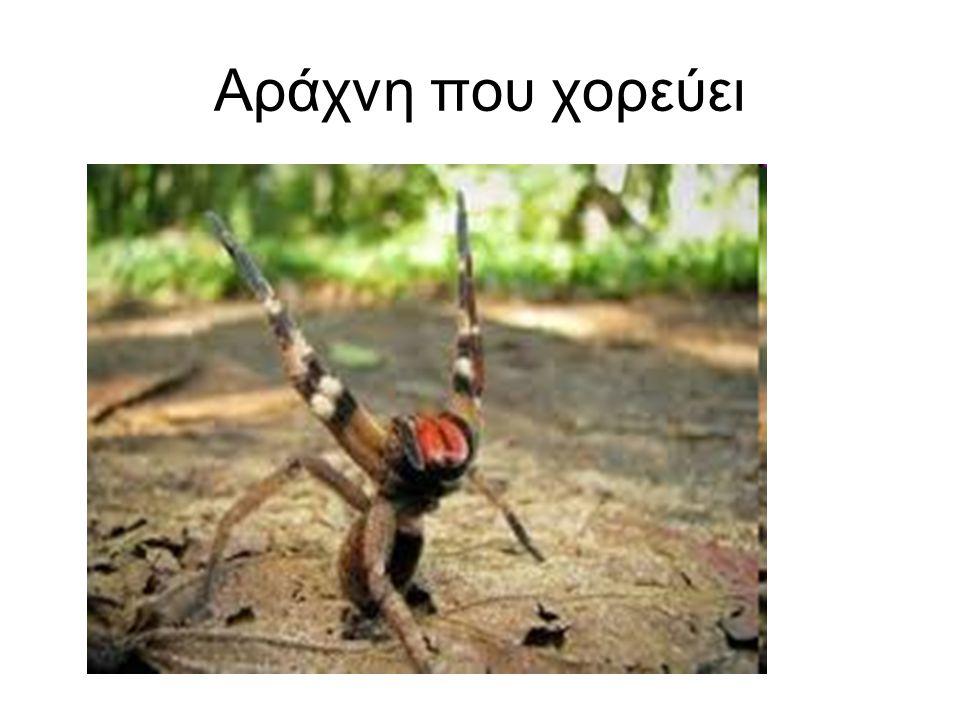 Αράχνη που χορεύει