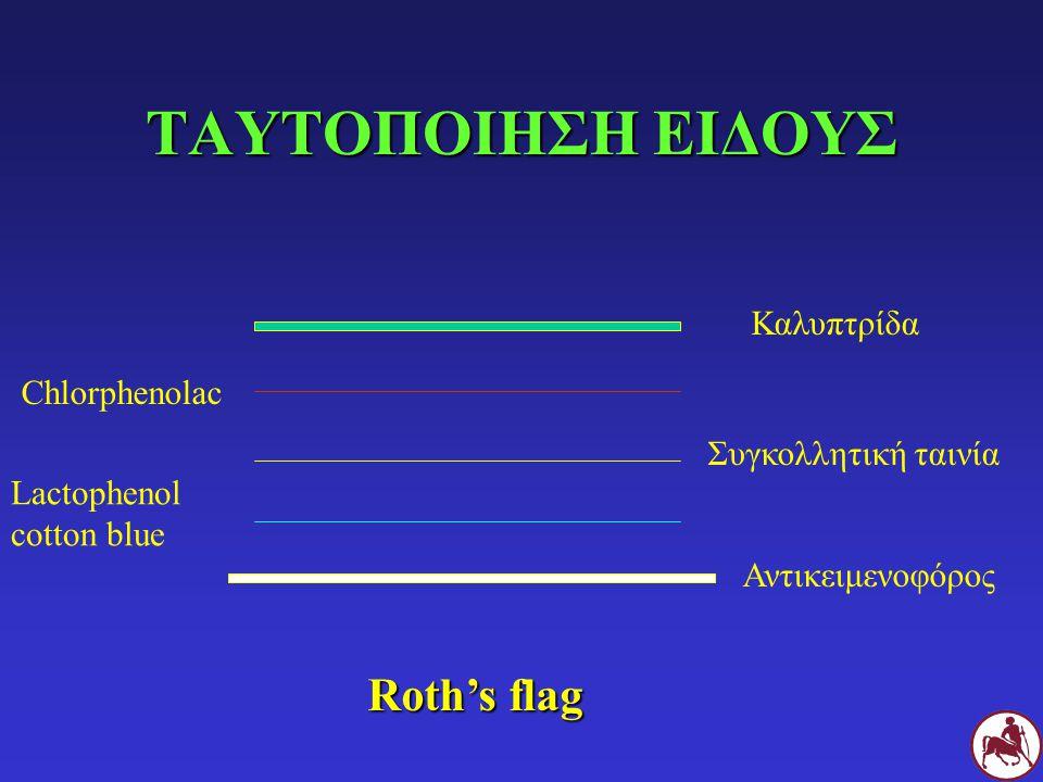 ΤΑΥΤΟΠΟΙΗΣΗ ΕΙΔΟΥΣ Roth's flag Καλυπτρίδα Chlorphenolac