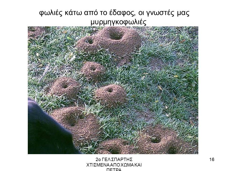φωλιές κάτω από το έδαφος, οι γνωστές μας μυρμηγκοφωλιές