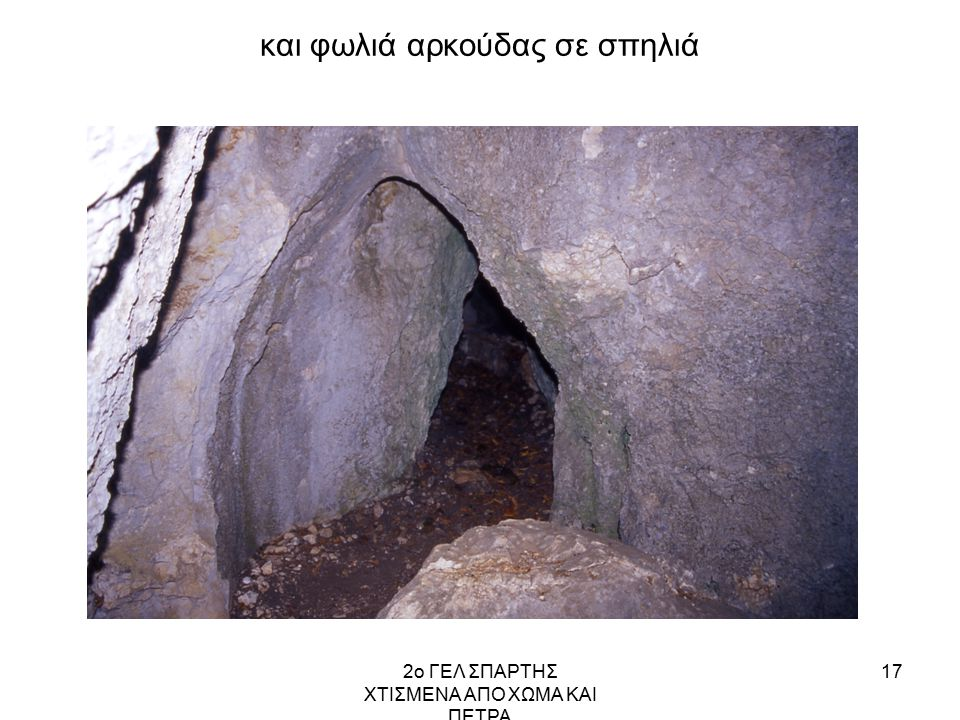 και φωλιά αρκούδας σε σπηλιά