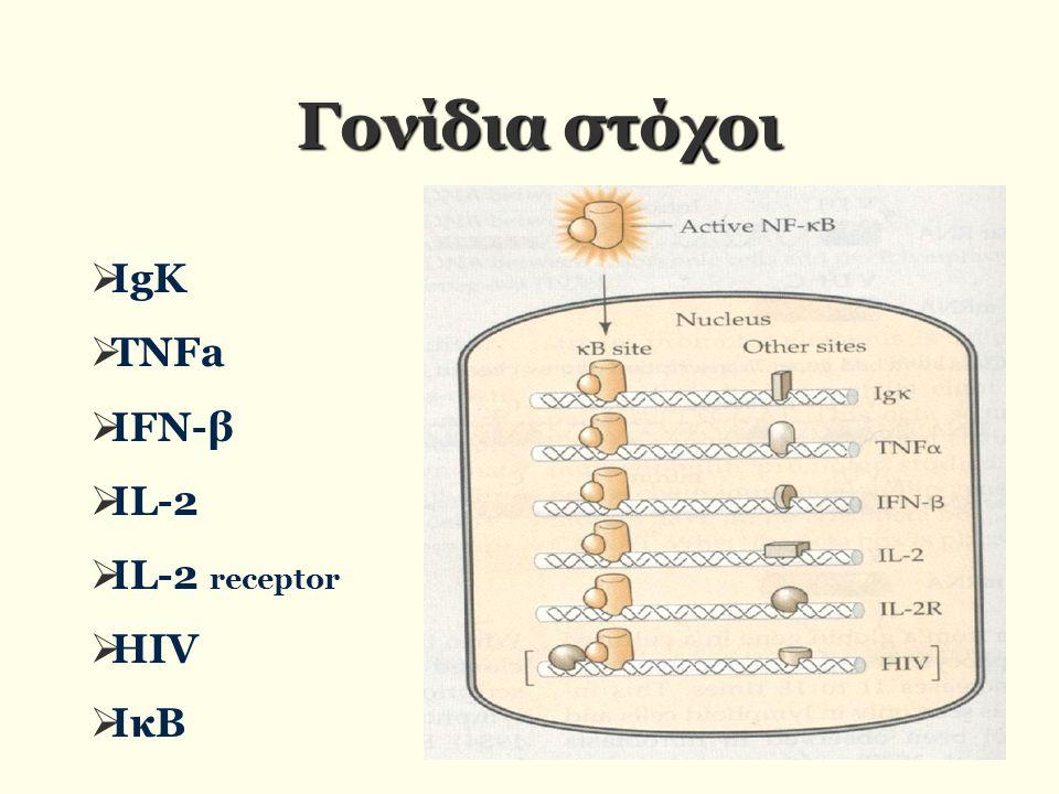 Γονίδια στόχοι ΙgK TNFa IFN-β IL-2 IL-2 receptor HIV ΙκΒ