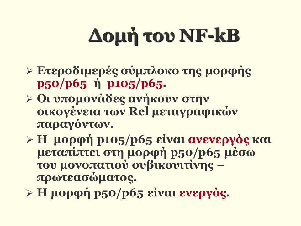 Δομή του ΝF-kB Ετεροδιμερές σύμπλοκο της μορφής p50/p65 ή p105/p65.