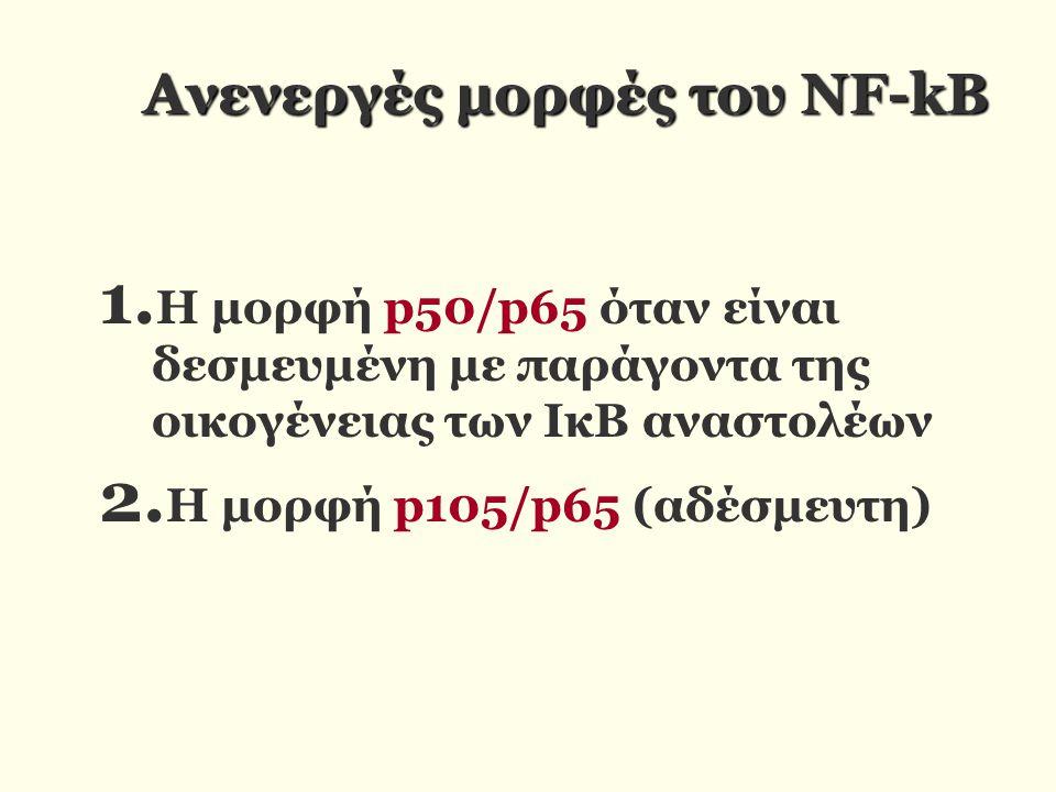 Ανενεργές μορφές του NF-kB