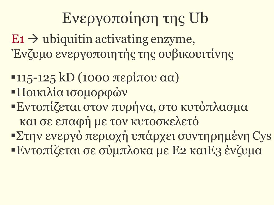 Ενεργοποίηση της Ub E1  ubiquitin activating enzyme,