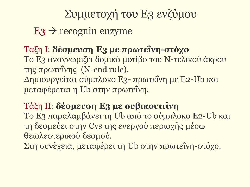 Συμμετοχή του Ε3 ενζύμου